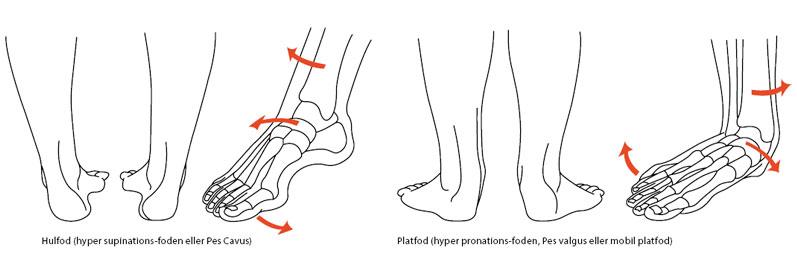antal knogler i foden